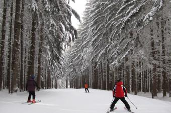 3 people skiing through trees